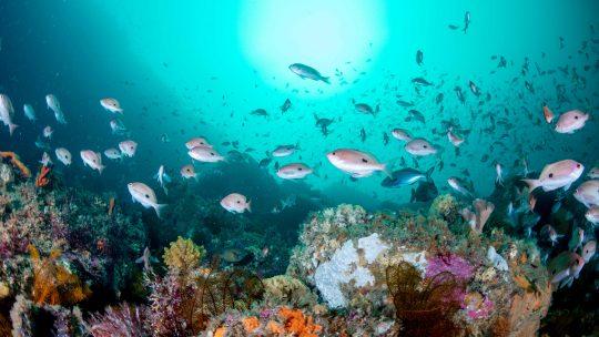 南の島のもっと南にあるタスマニアで絶滅危惧種クラスⅠに出会う
