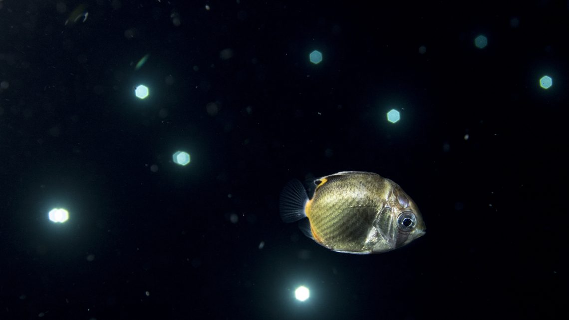 今アツイ!!浮遊系ダイビングを久米島で堪能する