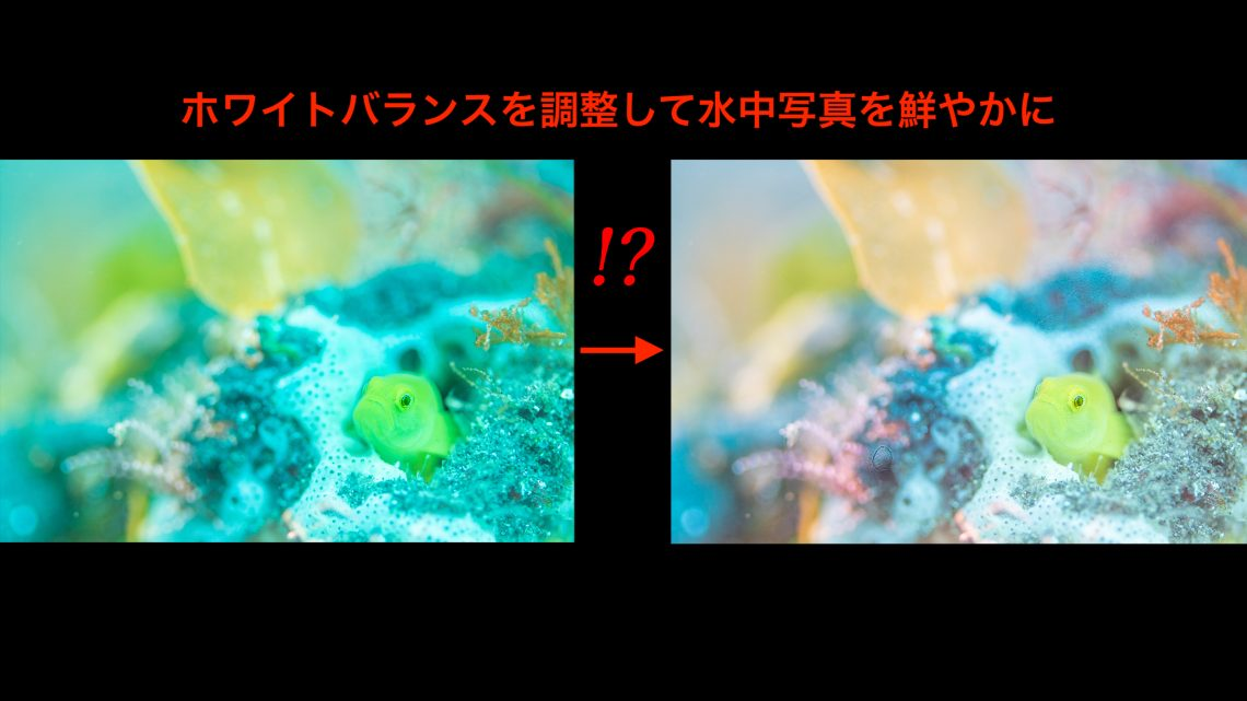 水中写真上達への道のりvol. 3 ~青被りしない。ホワイトバランスとは~