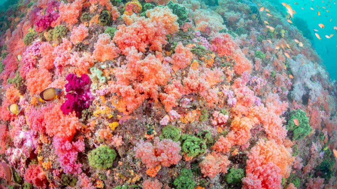 赤、ピンク、オレンジ、緑。ソフトコーラル畑に癒される伊東の海。